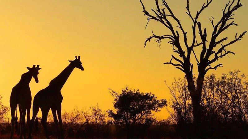 南非需求最大的进口产品是哪些?