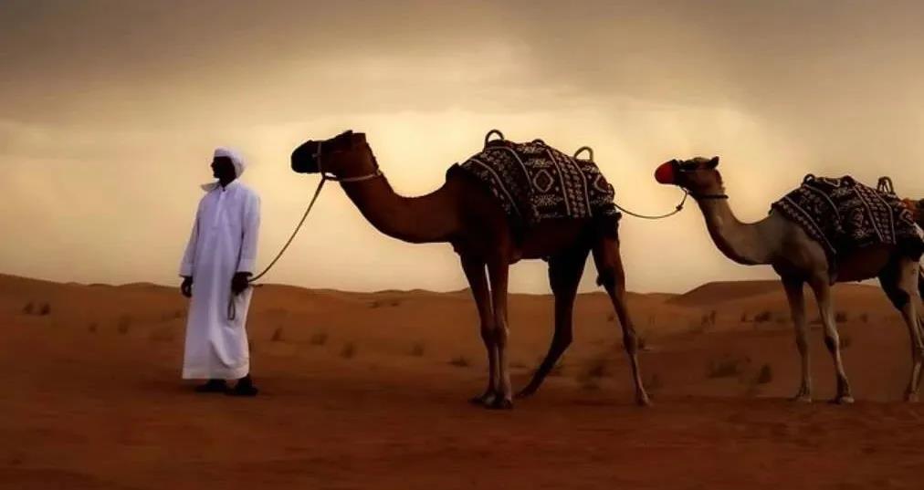 想要扩张中东市场?最全中东跨境电商势力大集合!