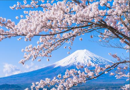 广州到日本海运专线介绍,日本海运专线公司