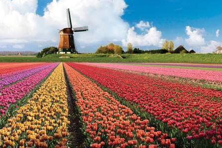 荷兰专线时效要多久 荷兰专线公司有哪些