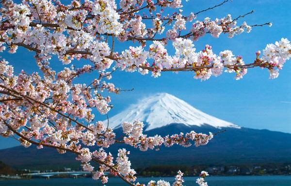 日本海运专线快递,国内到日本海运公司哪家好