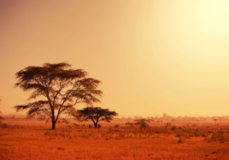 非洲货运专线介绍,非洲货运公司有哪些