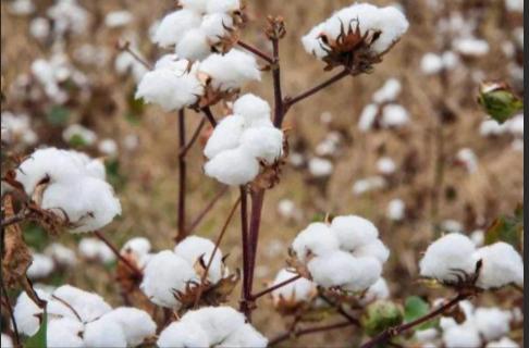亚马逊封杀含新疆棉花产品!中国卖家第一个不答应!